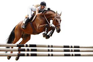 Performance Horse Work Icon